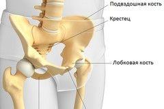 Лобкова кістка