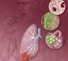 Органи, що вражаються пневмонією